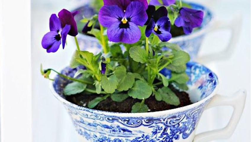 Fleurs dans une tasse