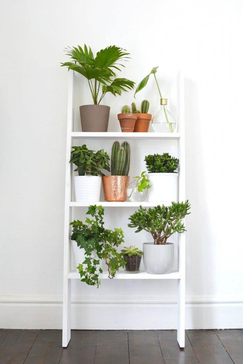Échelle avec plantes
