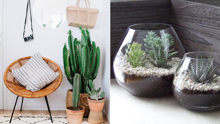 Plantes vertes dans la déco